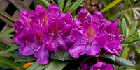 rhodie_and_rose-0542
